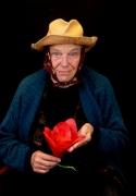die-blume-tulipan_06